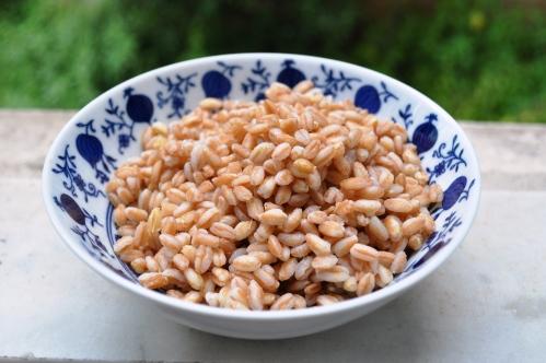 Cooked farro grain