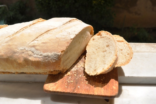 freshly cut biga loaf