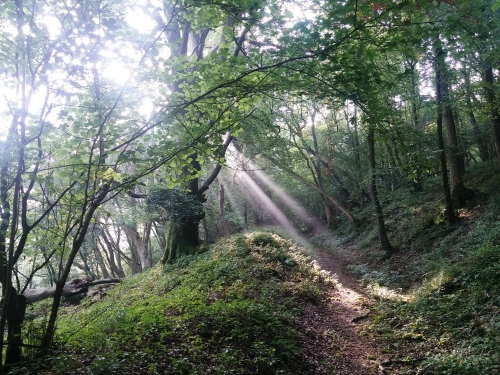 Sunlight through the morning mist in woods, near South Harting