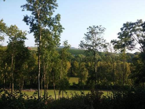 Vineyard near Exton