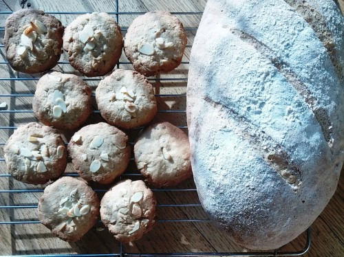 Bread and biscuits crop