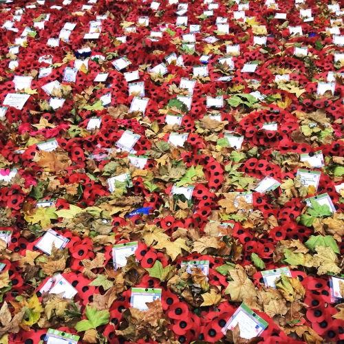 Poppies at Cenotaph